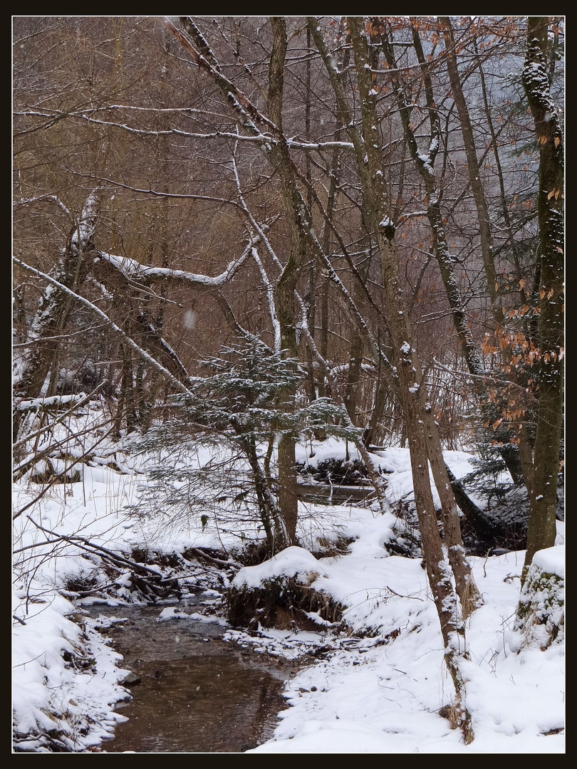 Bäumchen am Winterbach