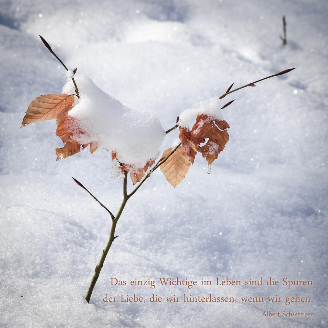 Bäumchen im Schnee