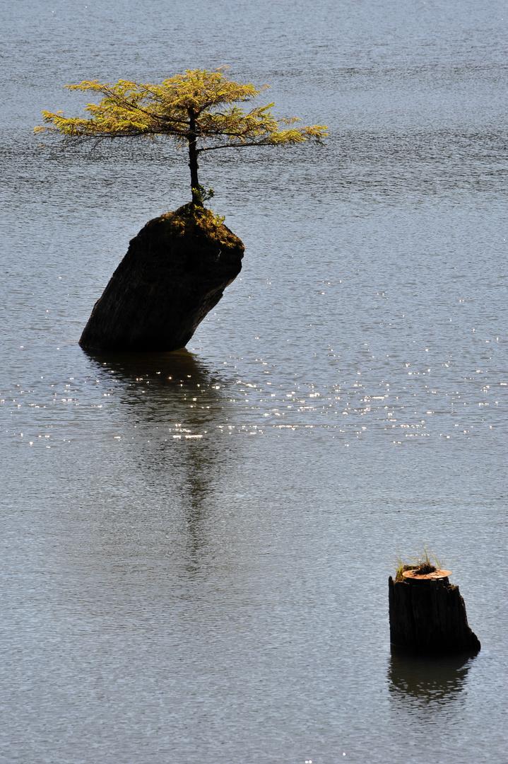 Bäumchen im See