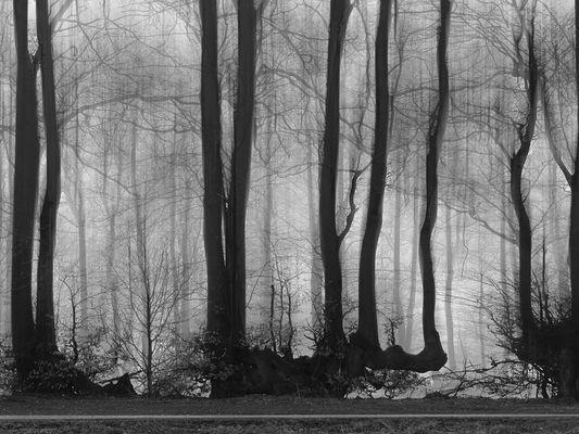 Bäume 1