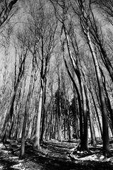 Bäume #1