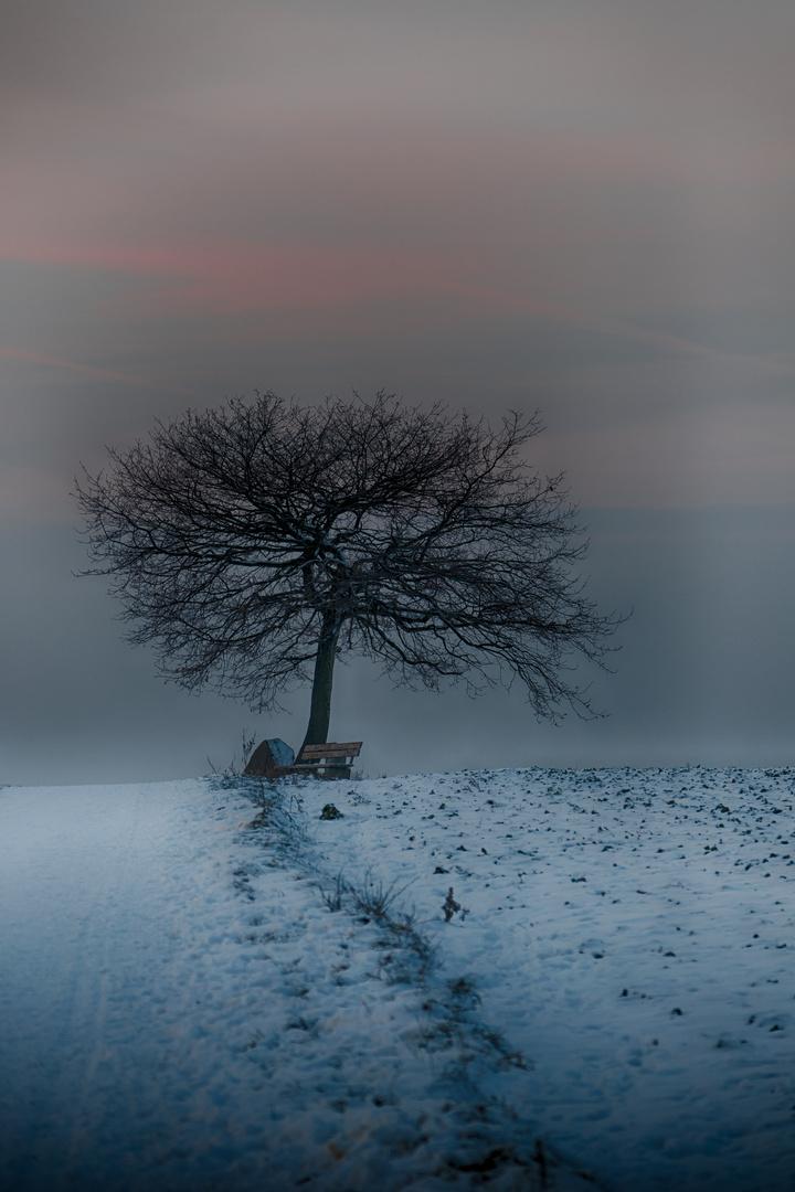 Bäume 13