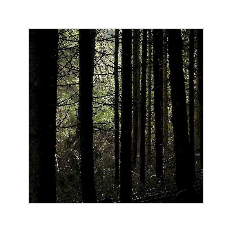 [ bäume ] ²
