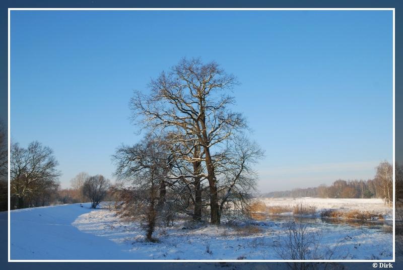 Bäume-2