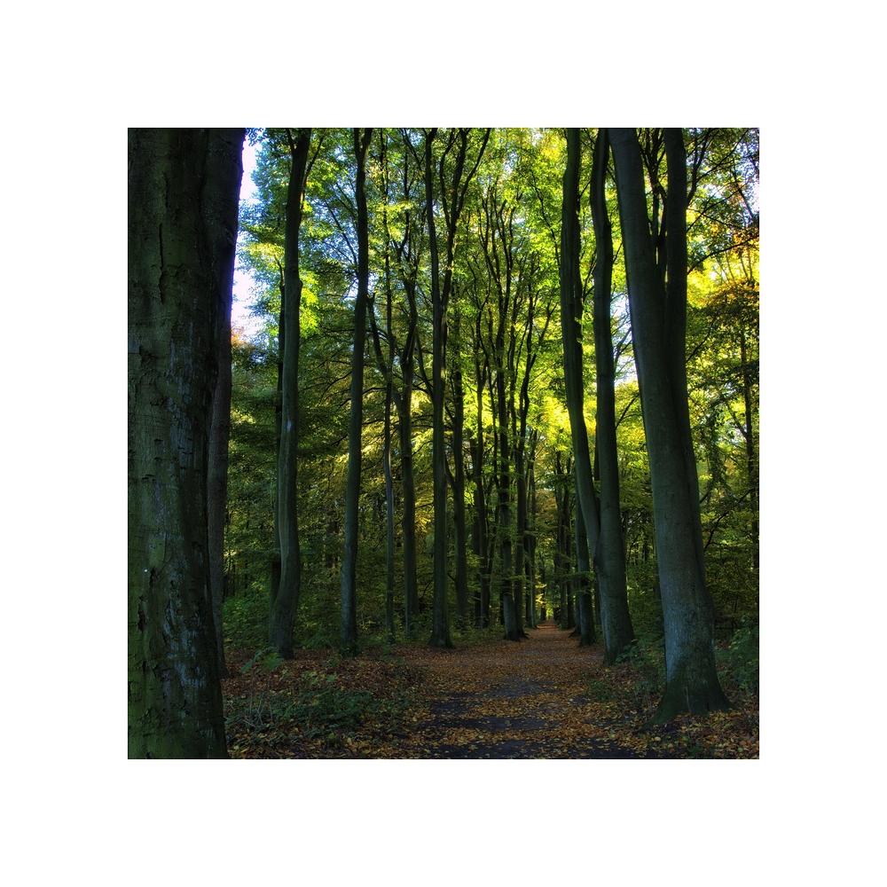 *Bäume (2)*