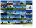 * Bäume 2011...*