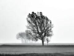 bäume ...