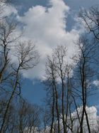 ..Bäume 3...