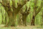 Bäume #3