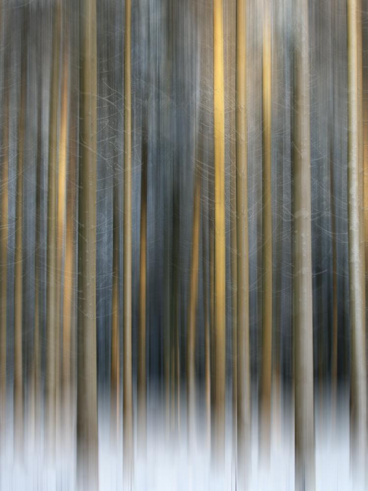 ... Bäume
