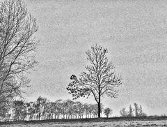 bäume ..