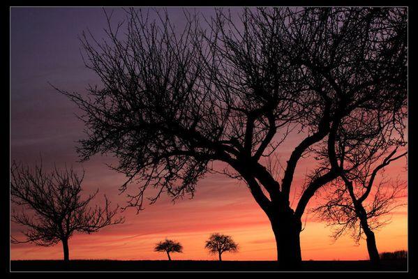 Bäume am Abend II