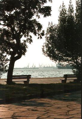 Bäume am Hafen