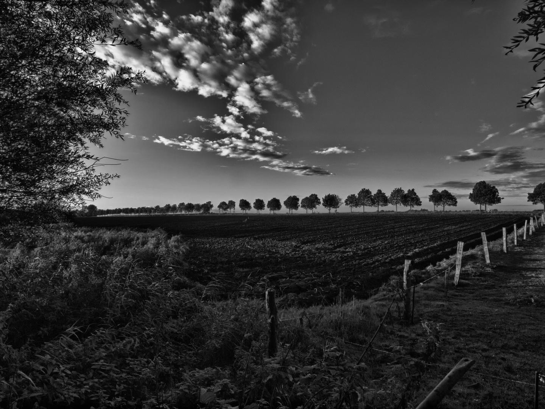 bäume am horizont ..