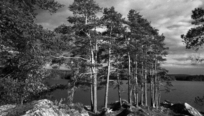 Bäume am Lelang