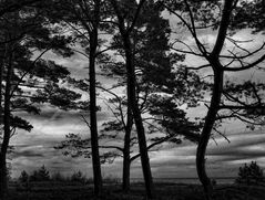 bäume am strand ...