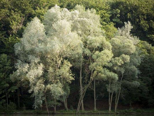 Bäume am Teichufer