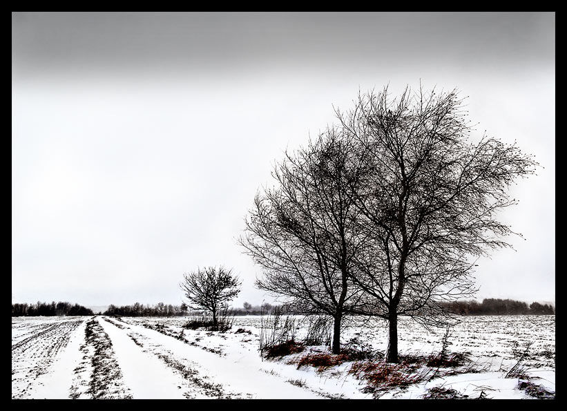 Bäume am Wegesrand