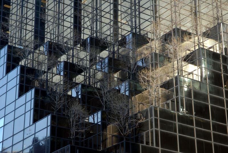 Bäume auf dem Trump Tower