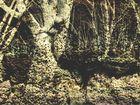 Bäume aus Steinen