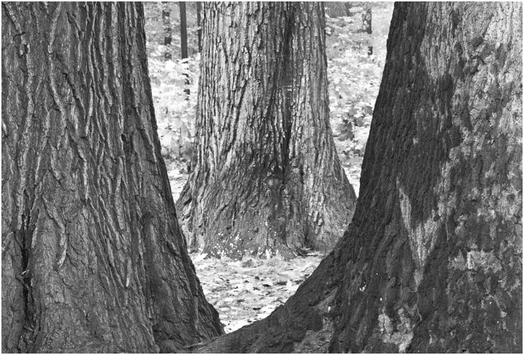 Bäume Bäume Zwischenräume