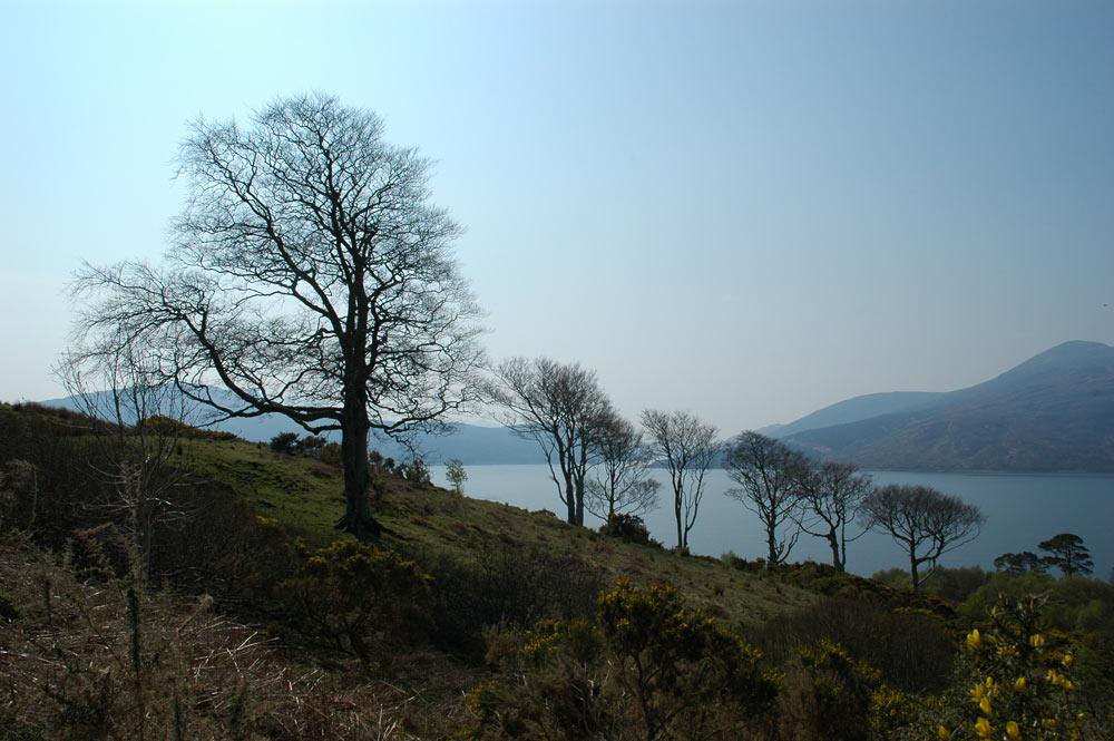 Bäume bei Kyle, West-Highlands