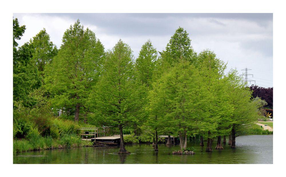 b ume die im wasser wachsen foto bild landschaft garten parklandschaften natur bilder. Black Bedroom Furniture Sets. Home Design Ideas