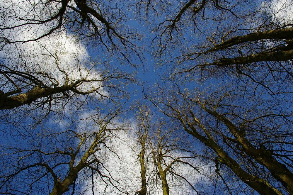 Bäume die in den Himmel wachsen..........