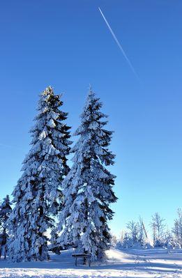 Bäume eingefroren in der Zeit