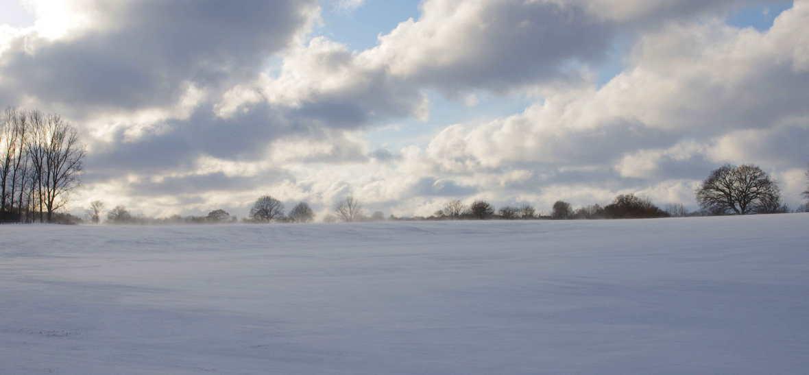 Bäume Feld und Schnee