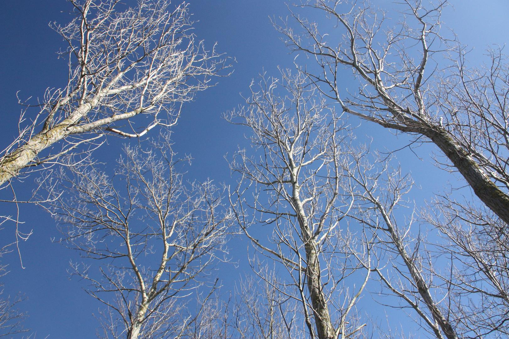 Bäume & Himmel