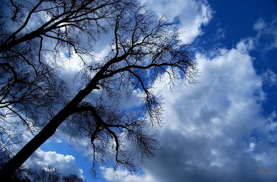 Bäume, Himmel, Wolken