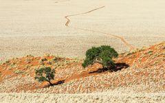 Bäume - III