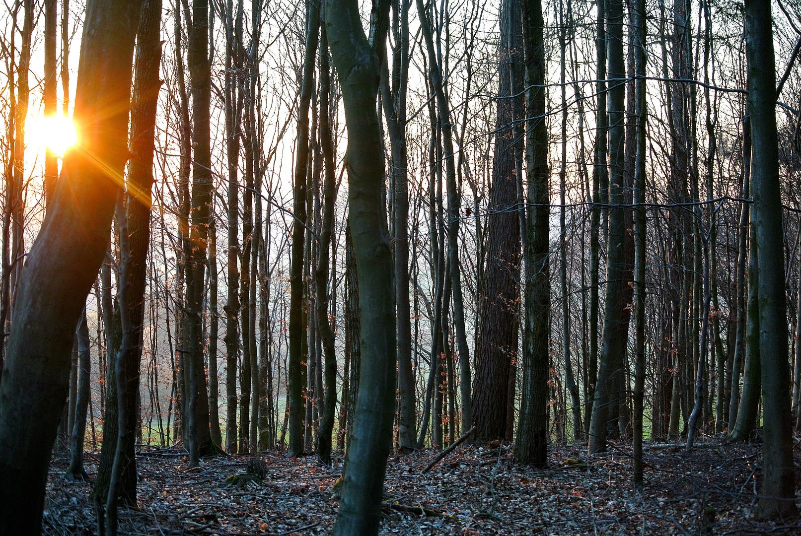 Bäume im Abendlicht