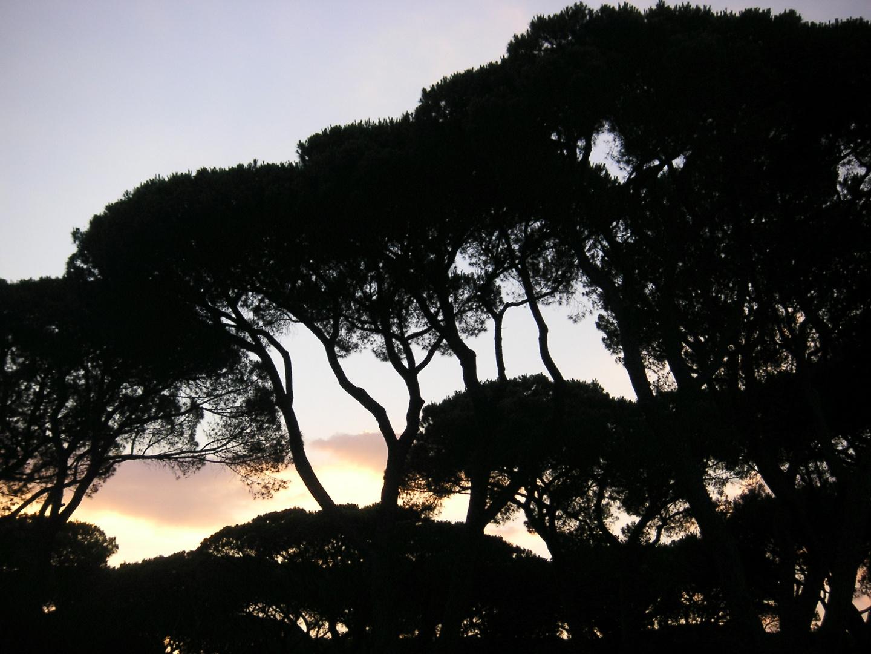 Bäume im Abendrot