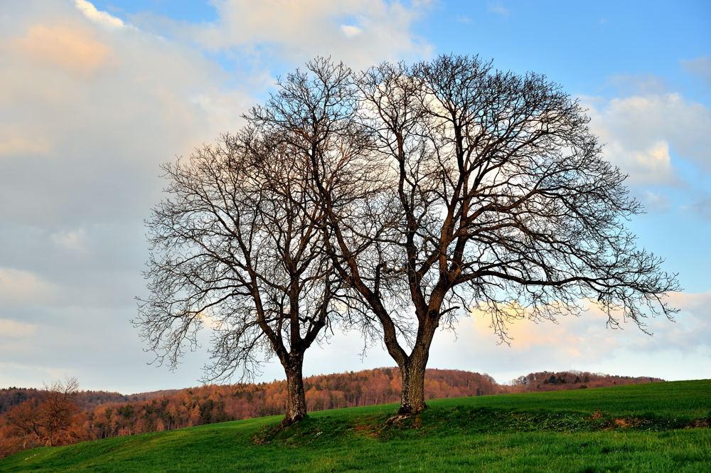 Bäume im Eichhölzli 1