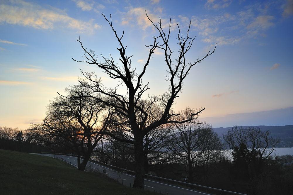 Bäume im Eichhölzli 5