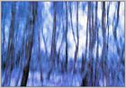 Bäume im Gegenlicht