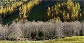 Bäume im Herbst von Guenther Glaser
