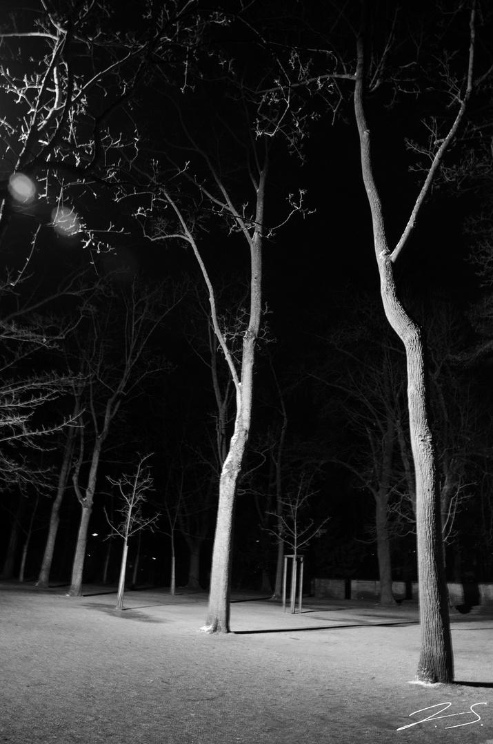 Bäume im Licht