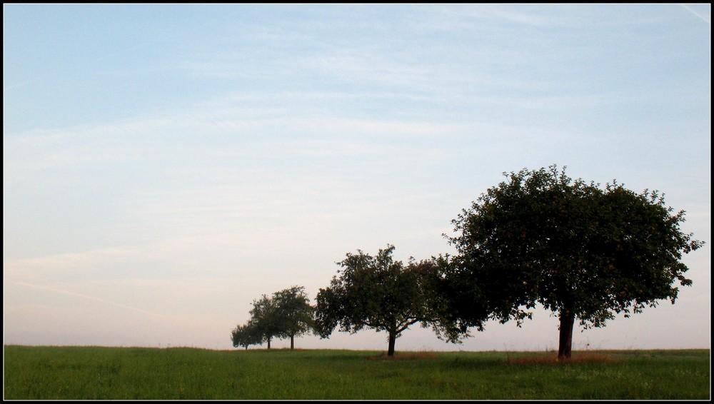 Bäume im Morgengrauen