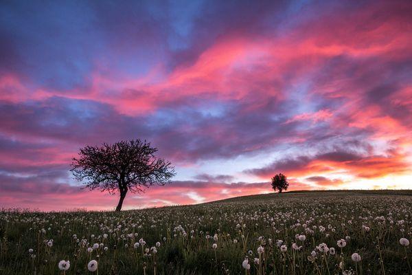 Bäume im Morgengrauen...