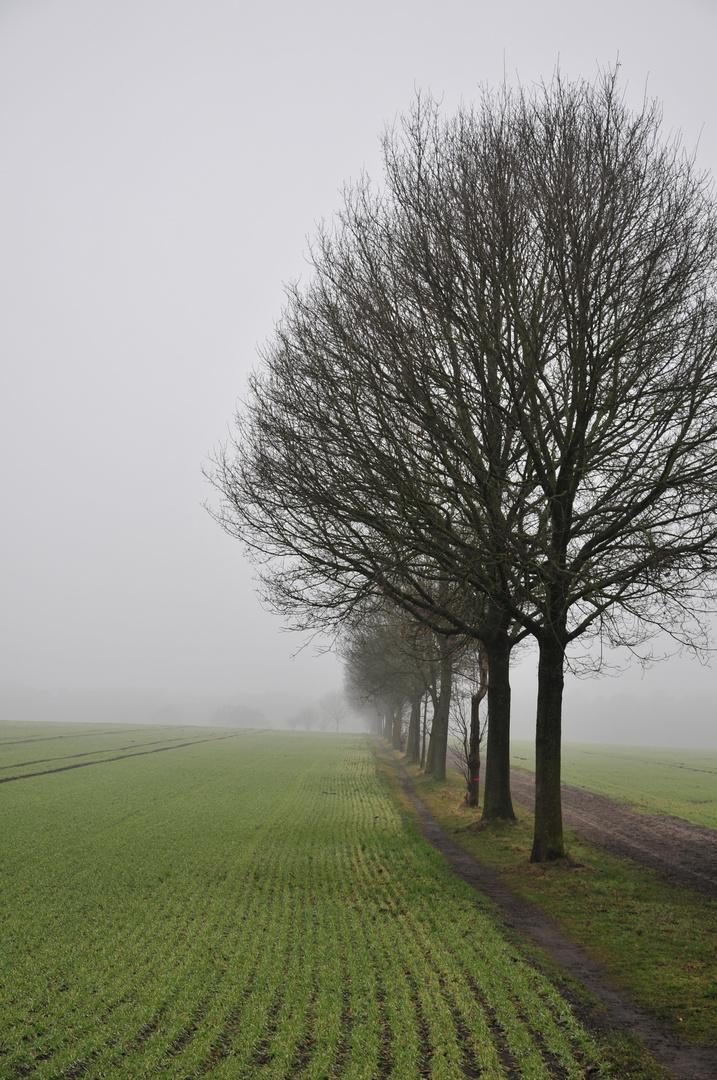 Bäume im Nebel...