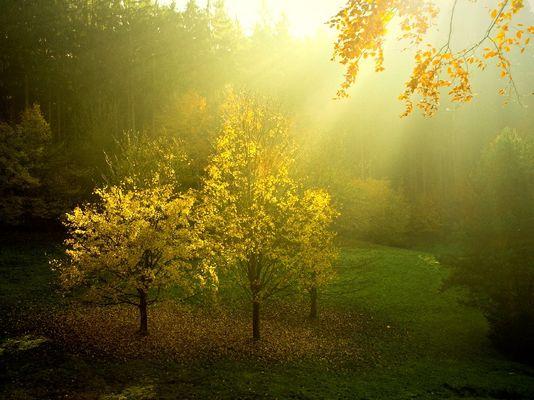 Bäume im Rampenlicht