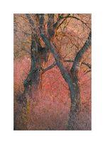 Bäume im Spätherbst