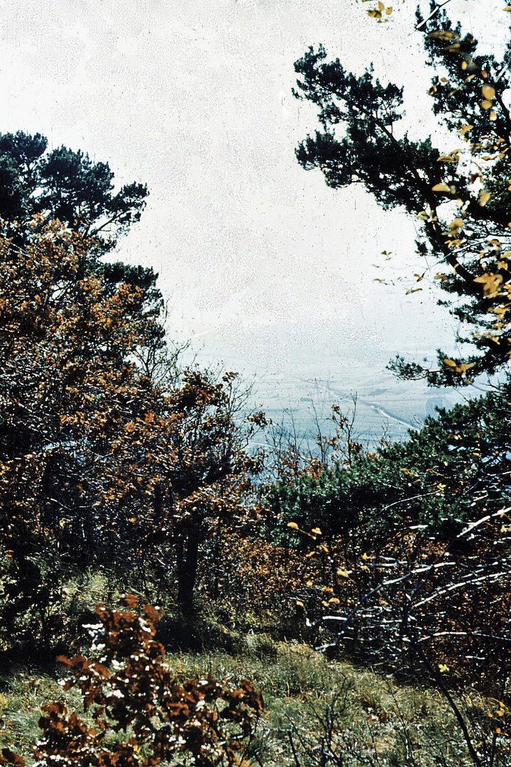 Bäume im Spätherbst – 2