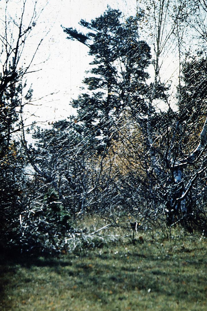 Bäume im Spätherbst – 3