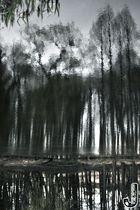 Bäume im Wasser