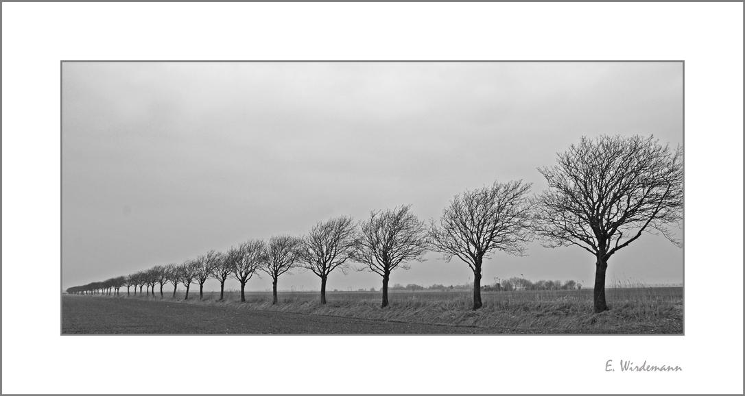 *Bäume im Wind*