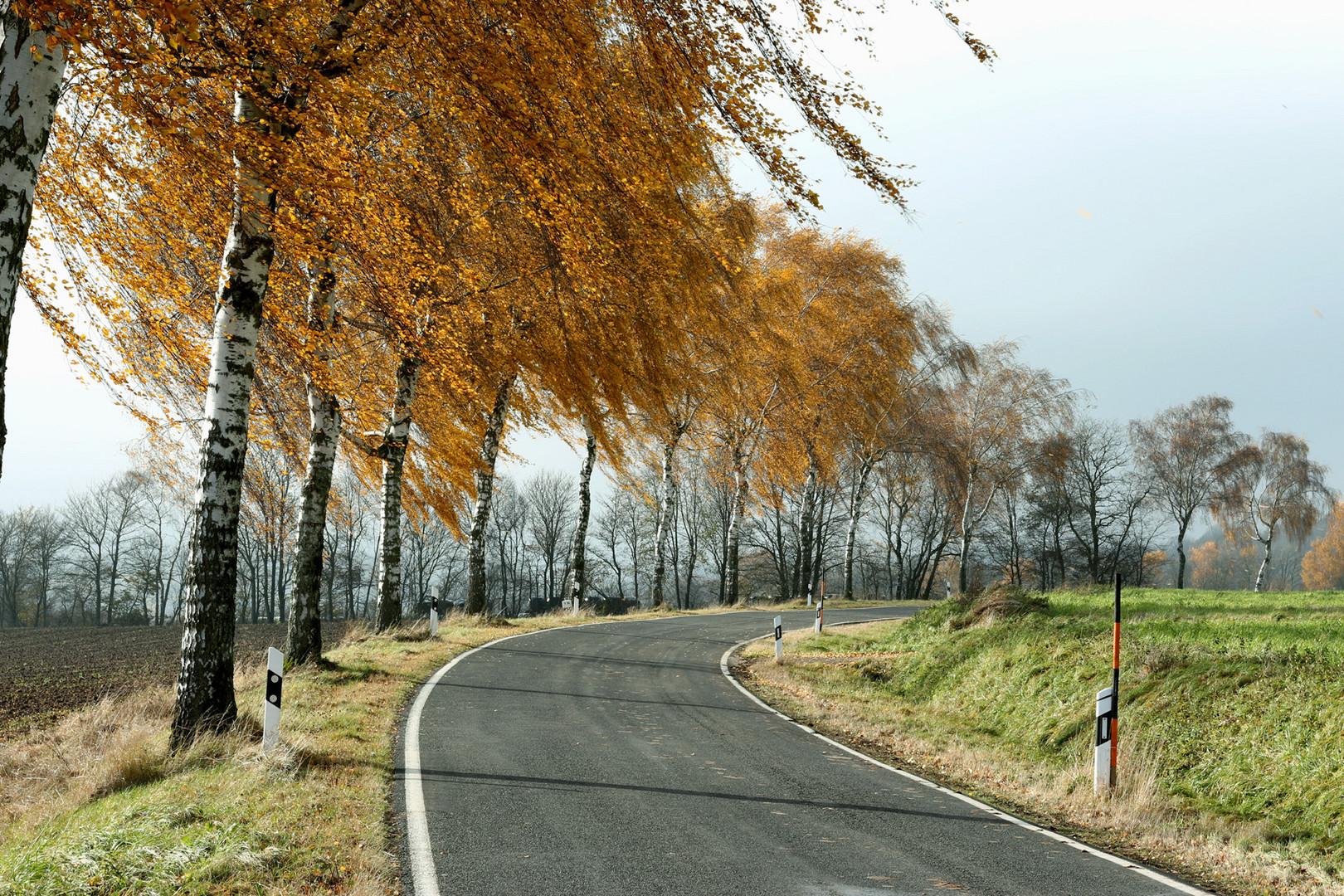 Bäume im Wind zur Strassenkurve